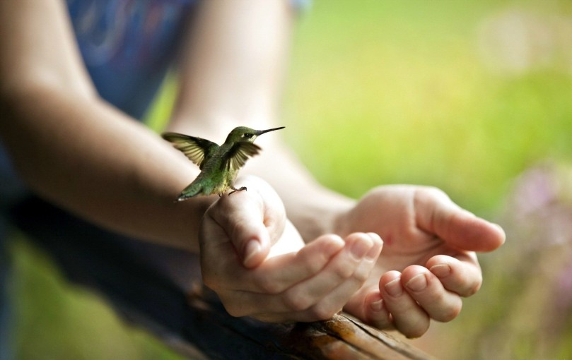 birds-humming-bird-wings-flying-hand-green-feather-cute-bird-pasari-colibri-hands-cool-wallpapers